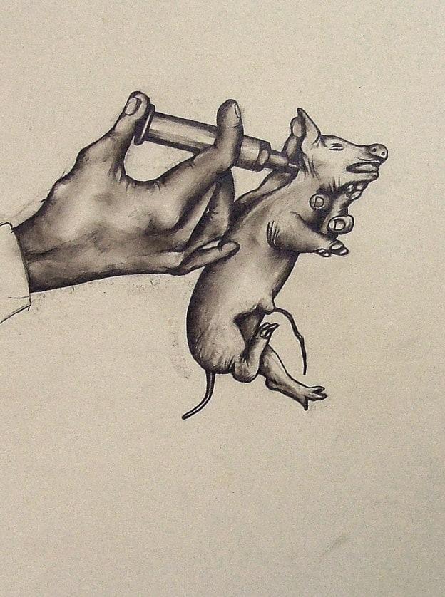 injecting piglet