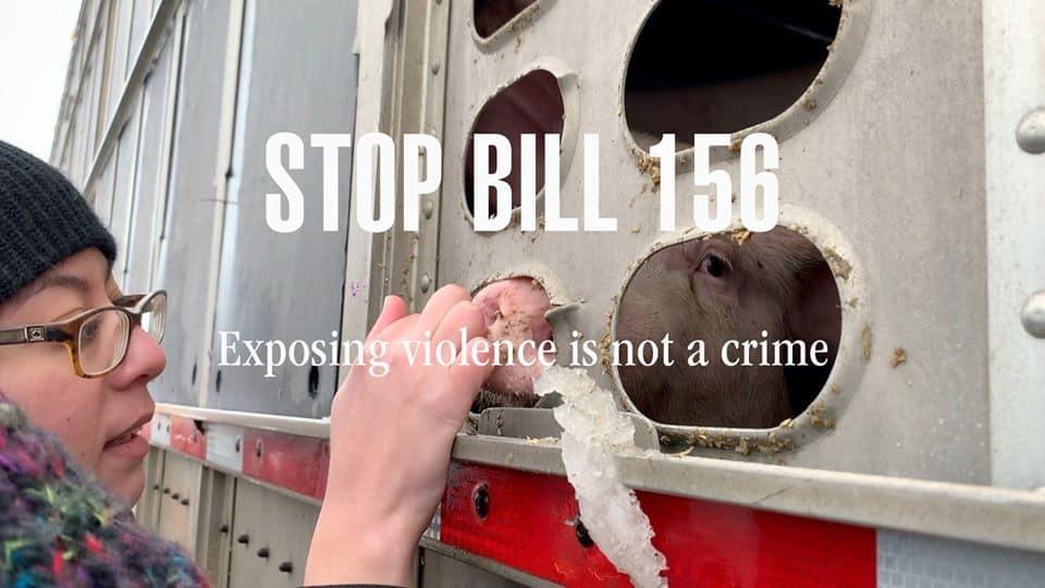 Stop Bill 156 pig vigil