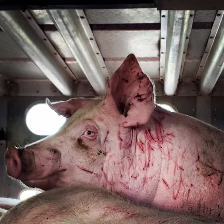 World Day Farmed Animals