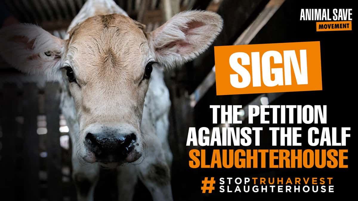 sign petition against calf slaughterhouse