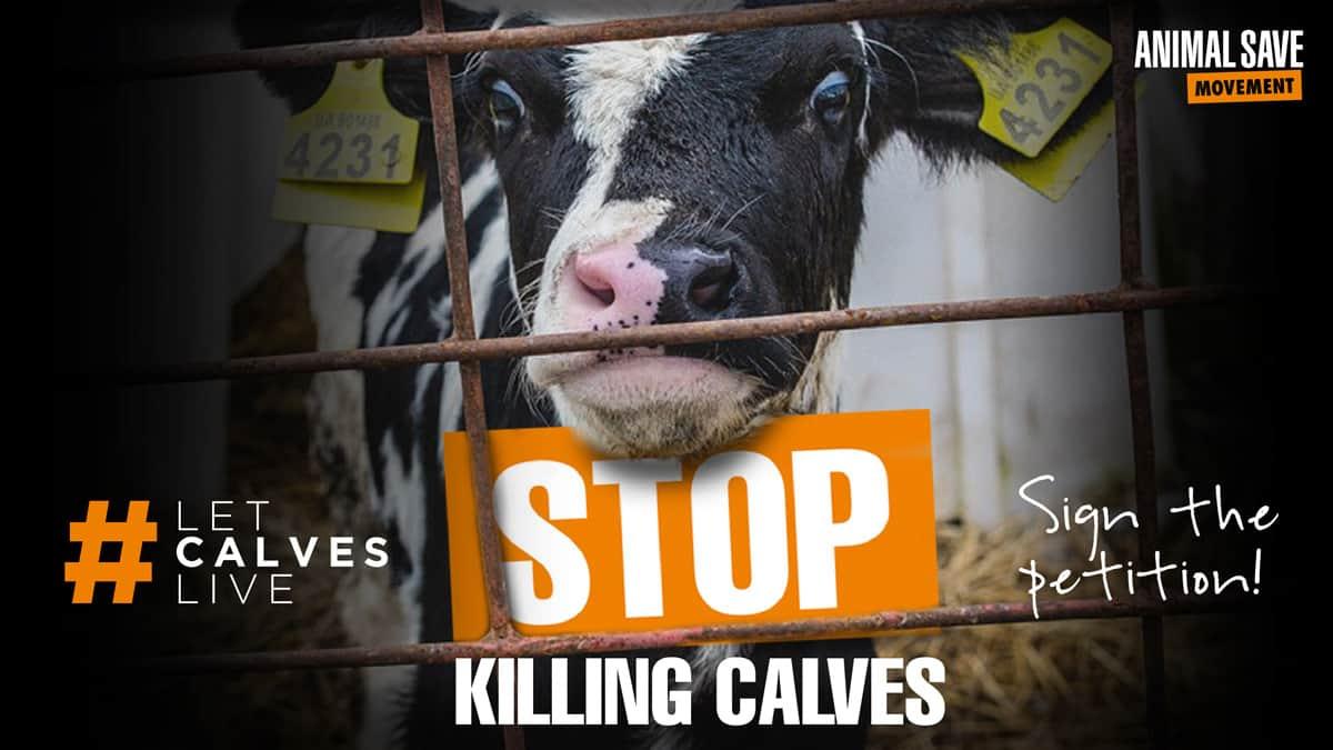 Tru Harvest stop killing calves
